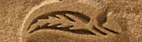 Sand carved logo on sandstone